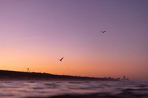 Vallée des fleurs de l'aube au bord de la mer