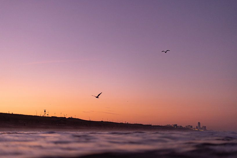 Vallée des fleurs de l'aube au bord de la mer sur Tomas Grootveld