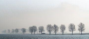 Bomen langs de rivier. van Floris van Woudenberg