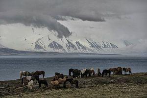 Paarden langs een Fjord
