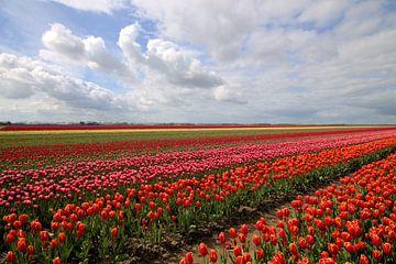 Typisch hollands landschap met tulpen von Frouwkje Fotografie