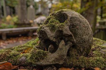 Friedhof des Schädels von serge baugniet