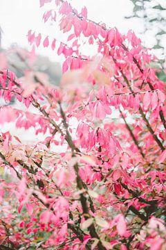 Roze Herfst Bladeren van Patrycja Polechonska