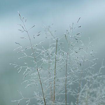 Kaltes Gras von P Leydekkers - van Impelen