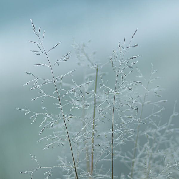 Koud gras van P Leydekkers - van Impelen
