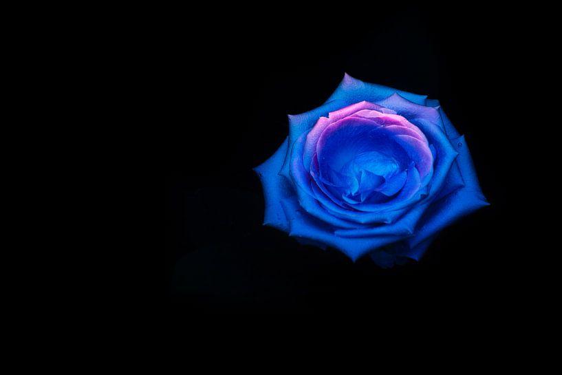 Drowned beauty (Serie: Roses) van Pascal Raymond Dorland