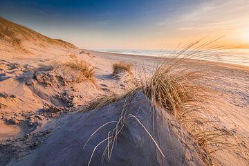 In de duinen van Texel van Ton Drijfhamer