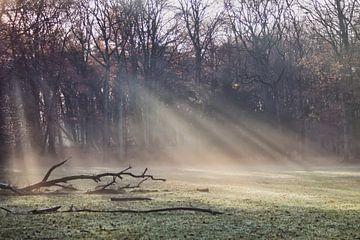 Im Rampenlicht von Shirley Douwstra