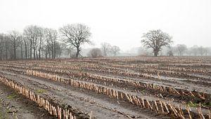 Akkerland met maïs stoppels in de herfst