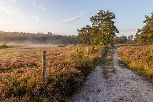 zonsopkomst op de heide van de teut in Limburg