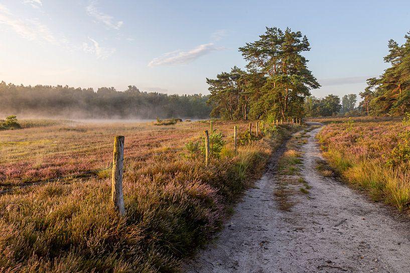 Lever de soleil sur la bruyère du teut dans le Limbourg sur Fotografie Krist / Top Foto Vlaanderen