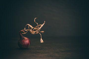 L'oignon rouge sur Regina Steudte | photoGina