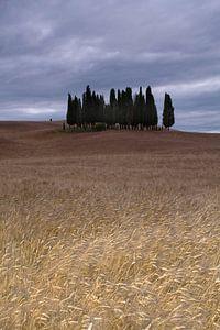 Cipressi di San Quirico d Orcia. Het cipressenbos in Toscane van