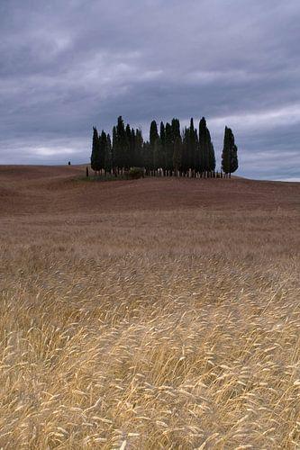 Cipressi di San Quirico d Orcia. Het cipressenbos in Toscane