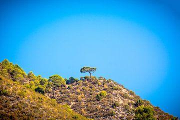 Op een heuvel von Bernardine de Laat