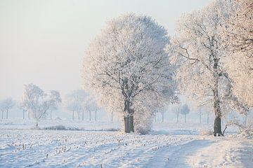 Schneelandschaft mit weißen Bäumen von Eric van Nieuwland