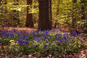 Blauw bos van Freya Clauwaert