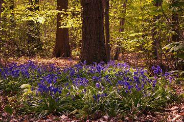 Blauw bos von Freya Clauwaert