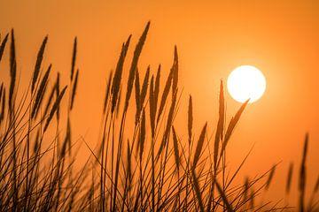 Zonsondergang in de duinen van Christian Müringer