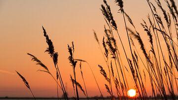 Sunset von Maja Ooms
