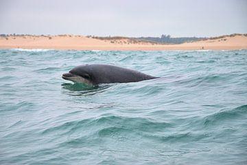 Delfin von Merijn Loch