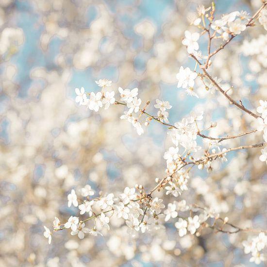 Witte Droom van Foto NVS