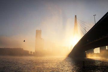 Matinée brumeuse à Rotterdam sur Gijs Koole