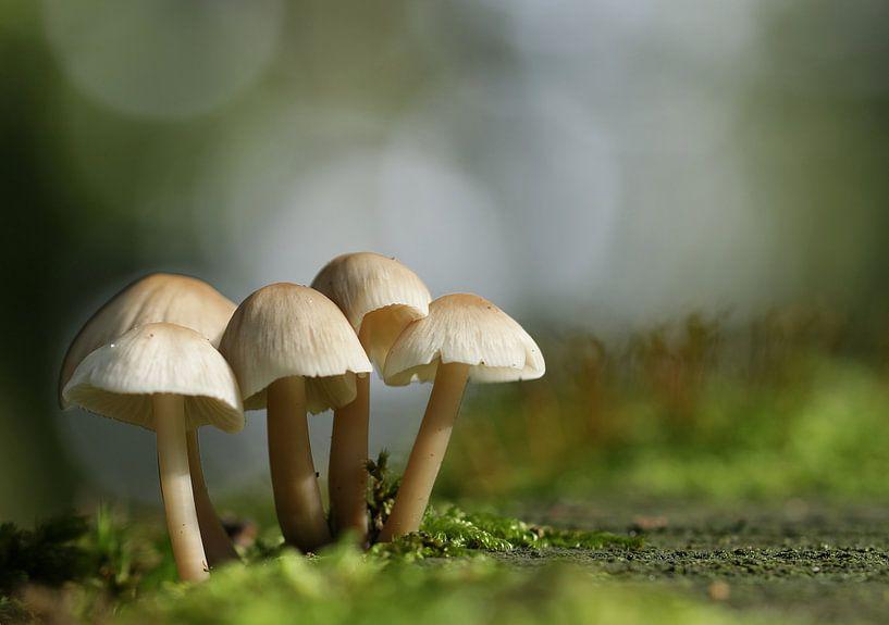 Paddenstoelen in de herfst van Annie Middeldorp