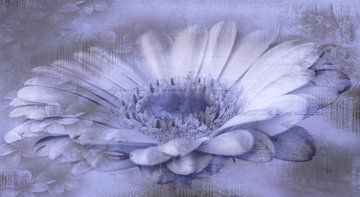 Gerbera paars, met tekst van Rietje Bulthuis