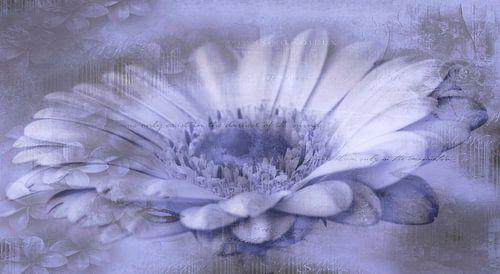 Gerbera paars, met tekst