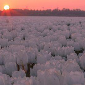 Zonsondergang Goeree Overflakkee van AdV Photography