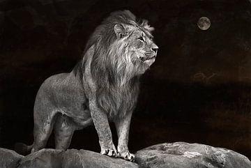 Leeuw  en maan  van Tejo Coen