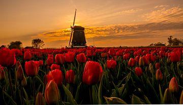 Holländisches Bild von peterheinspictures
