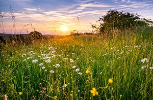 Wiese im Harz von Steffen Henze