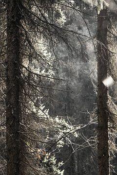 Door de bomen het bos zien van Jasper van de Gronde