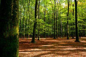 In het bos, in het bos