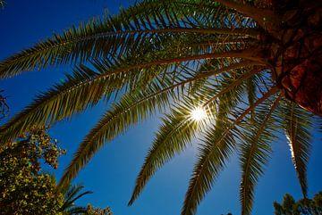 Palmboom en schitterende zon met blauwe lucht. van Edith van Aken