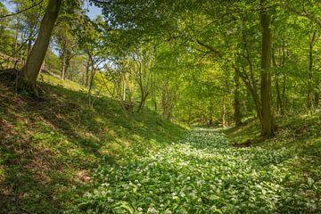 Der Fluss Daslook im Wald von Savelsbos von John van de Gazelle