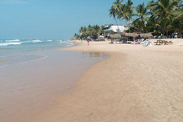 Palm strand in Sri Lanka van Rijk van de Kaa