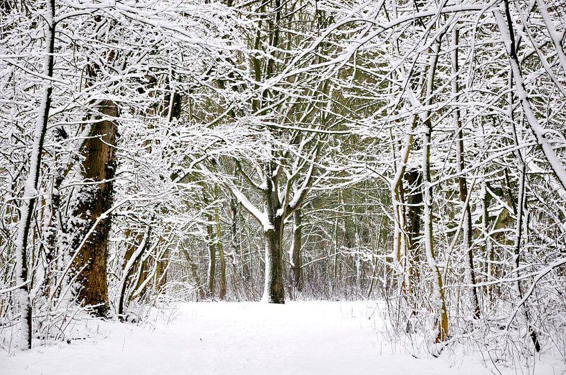 Winter forest  van Pim Feijen
