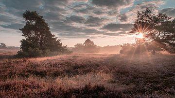 Vroege ochtendmist in de Westruper Heide van Steffen Peters