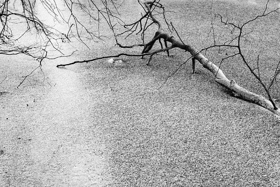 Takken in het ijs. van Marcel Pietersen