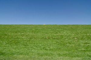Het eenzame schaap.