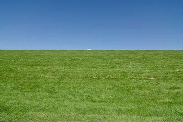 Het eenzame schaap. van Greet ten Have-Bloem