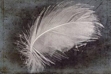Swan veer van Christine Nöhmeier