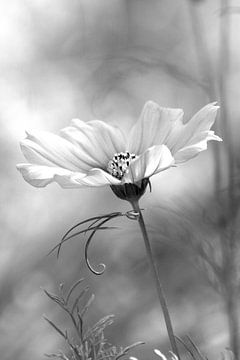 Kosmetische Blume von Bianca Arkesteijn