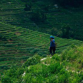 Chinese boerin op rijstveld II van André van Bel