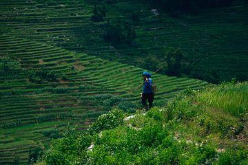 Chinese boerin op rijstveld II von André van Bel