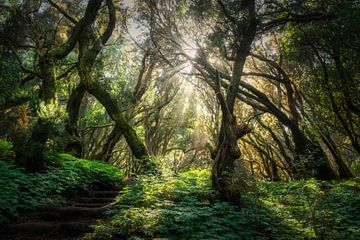 Naar het licht uitstrekkend van Joris Pannemans - Loris Photography