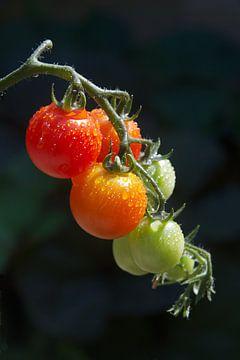 Tomaten van PvdH Fotografie